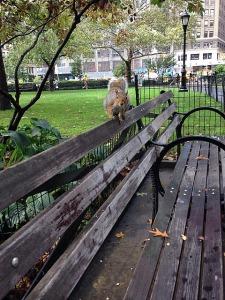 14.1413503045.squirrel-friend